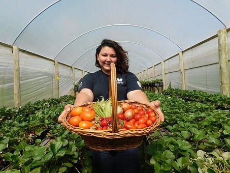 Organic, Organic Production, Production, Nature