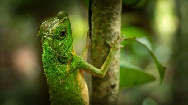 Reptile, Jungle, Green, Sri Lanka