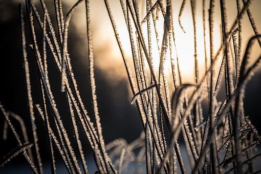 Grass, Snow, Sunrise, Winter, Nature, Hoarfrost, Rime