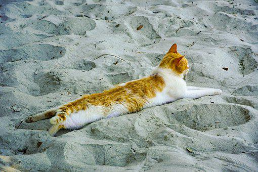 Cat, Relax, Sand, Beach, Lying Down, Kitty, Feline