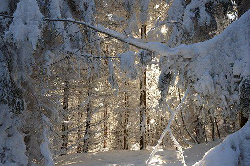 Winter, Mountains, Tree, Landscape, Snow, Nature, Cold