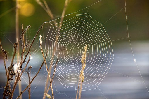 Spider, Spider Webs, Cobweb, Araneus, Nature, Web, Case