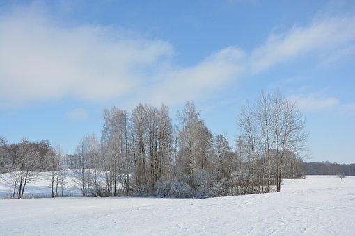 Winter, Snow, Suwałki Region, Nature, Landscape, Tree