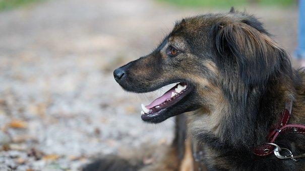 Dog, Puppy, Pet, Wild, Wildlife, Nature, Woof, Smile