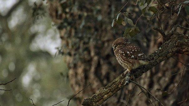 Owl, Birdphotography, Naturephotography, Wildlife