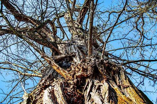 Nature, Tree, Wood, Tribe, Winter