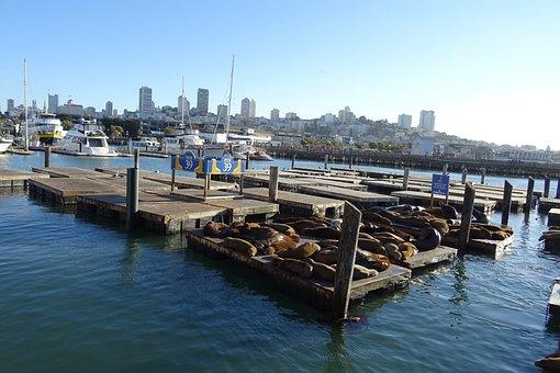 Sea Lion, Animal, Marine, Wildlife, Mammal, Fauna