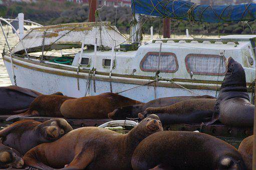 Sea Lion, Dock, Animal, Nature, Wildlife, Marine