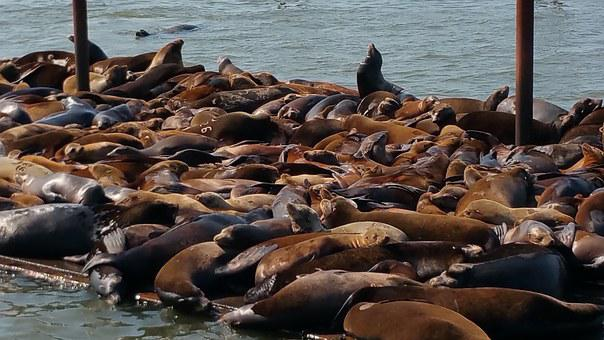Sealions, Astoria Oregon, Pacific Northwest, Astoria