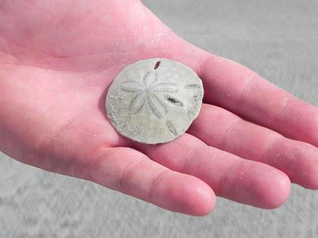 Sand Dollar, Beach, Sand, Dollar, Ocean, Sea, Shell