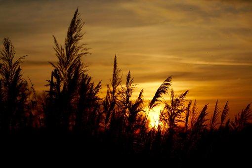 Sun, Sundance, Hungary, Nature, Beautiful Nature, Grain