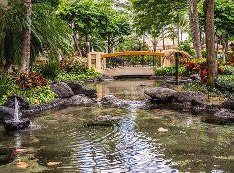 Pond Resort, Bridge, Koi Pond, Outdoors Nature, Water
