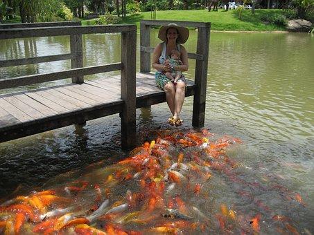 Fish, Aquaria, Lake, Koi, Mother, Child, Family