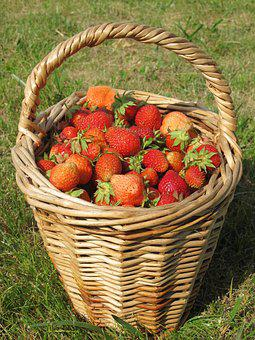 Strawberry, Summer, Dacha, Basket, Berry, Harvesting