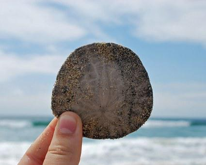 Beach, Sand Dollar, Ocean, Sand, Dollar, Summer, Sea
