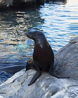 Sea Lion, Sea, Park, Fauna, Mamals, Zoo, Animals