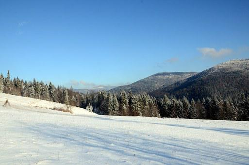 Winter, Mountains, Snow, Forest