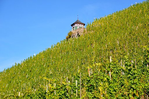 Vineyard, Bernkastel Kues, Wine, Slope, Vines, Grapes