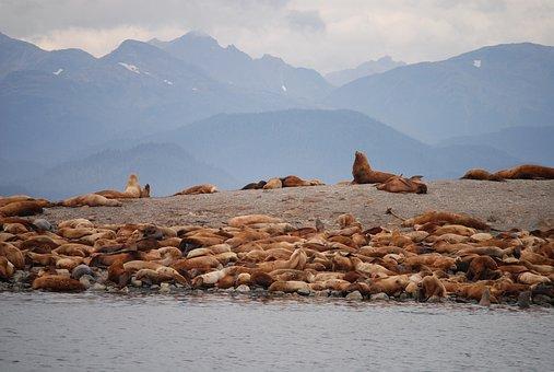 Sea Lions, Juno Alaska, Alaska, Animals