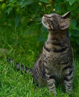 Cat, Young Animal, Adidas, Dear, Kitten, Playful