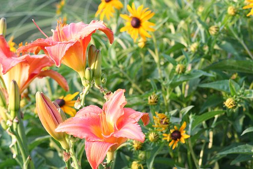 Flower, Lilly, Lily, Plant, Green, Summer, Yellow