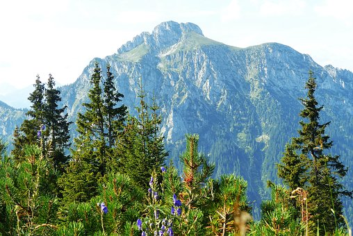 Säuling, From The Tegelberg, Allgäu, Mountains, Forest