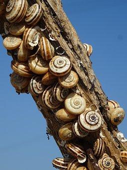 Snails, Branch, Snail Shell, Nature