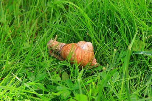 Snail, Nature, Kassari, Hiiumaa, Grass, Slow