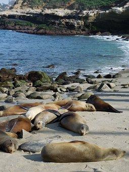 Beach, Coast, Ocean, Diego, San, Marine, Jolla, La