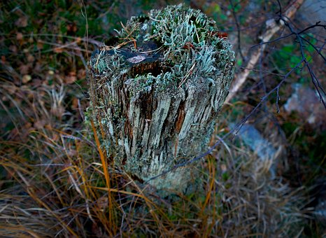 Three, Tree Root, Old, Rotten, Cracks, Moss, Grass