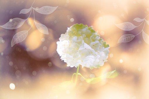 Blossom, Bloom, White, Snow Ball, Plant, Flower