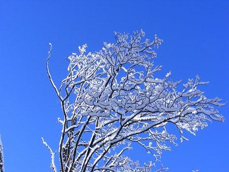 Winter, Tatry, Poland, Kościeliska Valley, Mountains