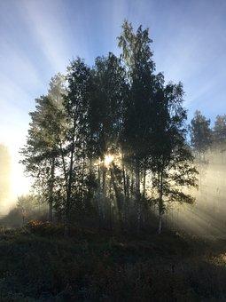 Mist, Backlight, Rays Of Sunshine, Tree, Hardwood