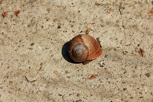 Snail, Conch, Sand, Shell, Rhinestones