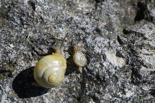 Snails, Crawl, Steinig, Yellow, Shell, Slowly, Mollusk
