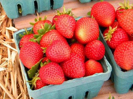 Fruit, Strawberry, Basket, Organic, Eating, Gardening