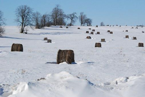 Snow, Cold, Trees, Winter, Nature, Weather, Hay