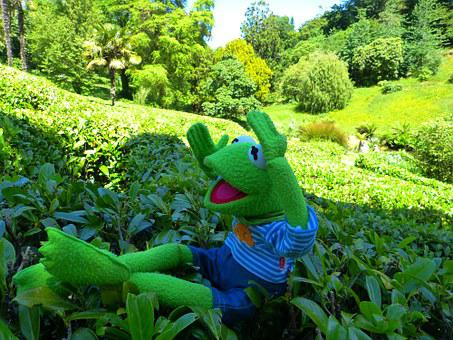 Maze, Kermit, Frog, Way Out, Glendurgan, Garden
