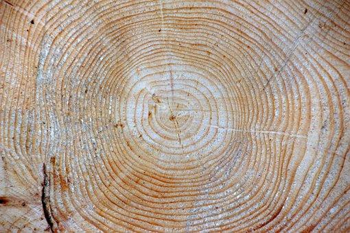 Wood, Spruce, Picea Abies Jahresringe, Background