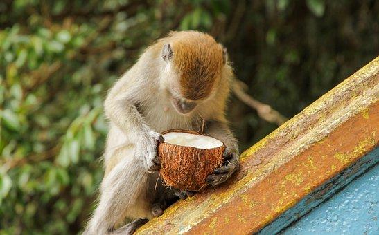 Ape, Monkey Boy, Monkey, Animal, Mammal, Animal World