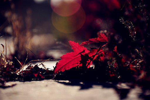 Autumn, Red Leaves, Backlighting, Defoliation, Red