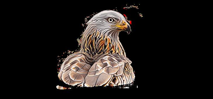 Eagle, Bird, Head, Eagle Head, Feathers, Plumage, Ave