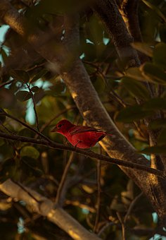 Cardinal, Bird, Branch, Perched, Animal