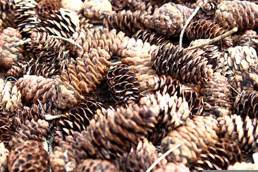 Pine Cones, Brown, Cones, Conifer, Conifer Cones
