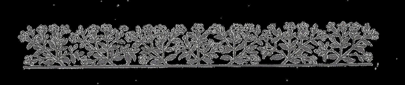 Floral, Ornamental Plant, Bloom, Silhouette, Cut