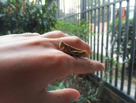 Cricket, Bugs, Face, Environment, Detail, Naturaleza