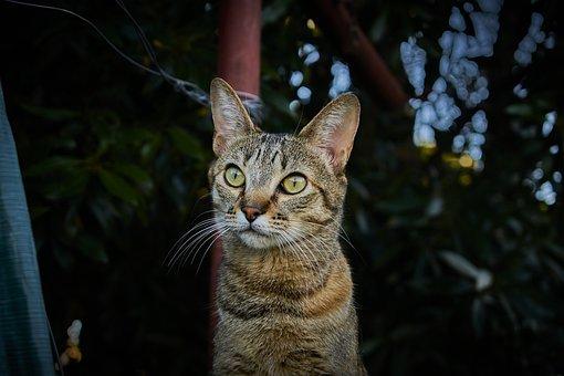 Cat, Cat Eyes, Feline, Fur, Face, Kitten, Mammal