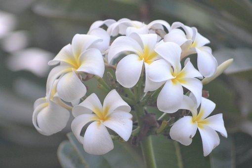 Flower, White, Nature, Spring, Bloom, Blossom, Plant