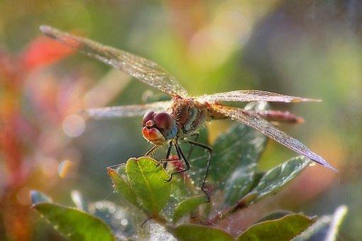 Dragonfly, Summer, Nature, Wing, Garden, Dew