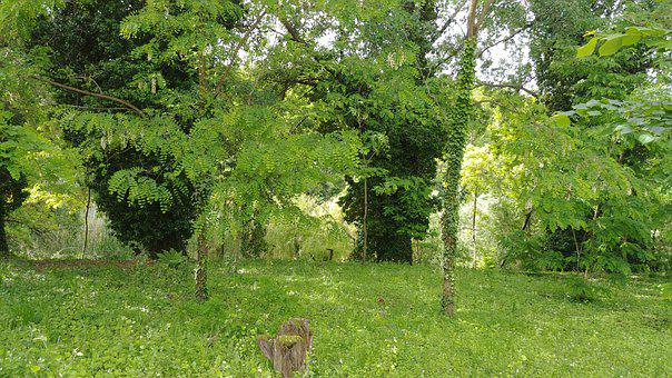 Nature, Summer, Forest, Clump, Green, Grass, Lawn
